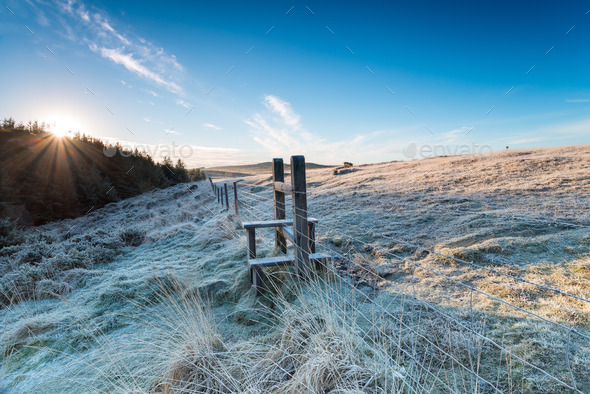 Winter Frost - Stock Photo - Images