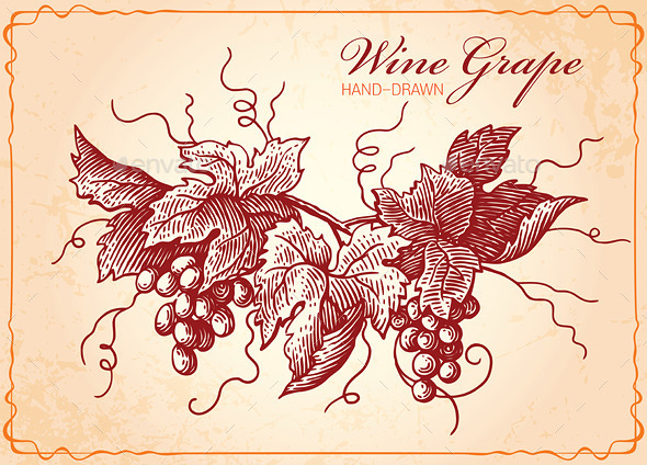 Wine Grapes Vintage Style Illustration - Organic Objects Objects