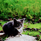 Kitten on a Walk - VideoHive Item for Sale