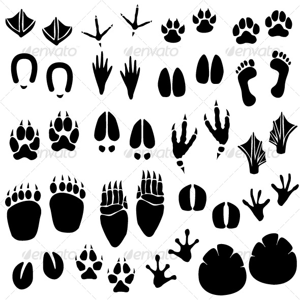 Animal Footprint Track Vector by Leremy GraphicRiver