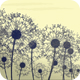 Dandelion Breeze - VideoHive Item for Sale