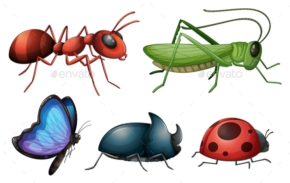 Various Insects and Bugs - Animals Characters