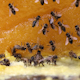 Bees On A Big Piece Of Yellow Flower Honey - VideoHive Item for Sale