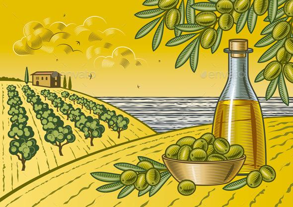 Olive Harvest Landscape - Landscapes Nature
