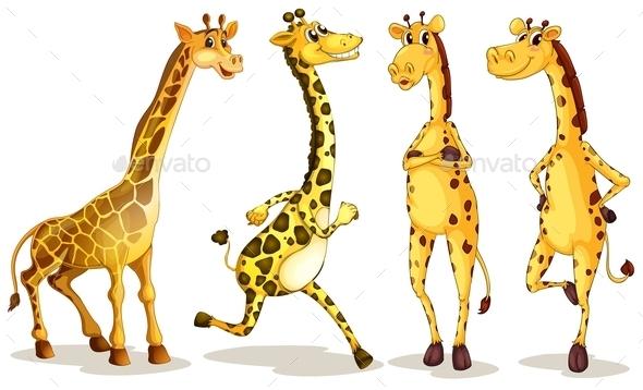 Giraffes - Animals Characters