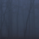 Scary Forest with Fog - VideoHive Item for Sale
