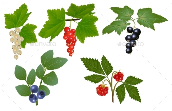 Set of Berries - Food Objects