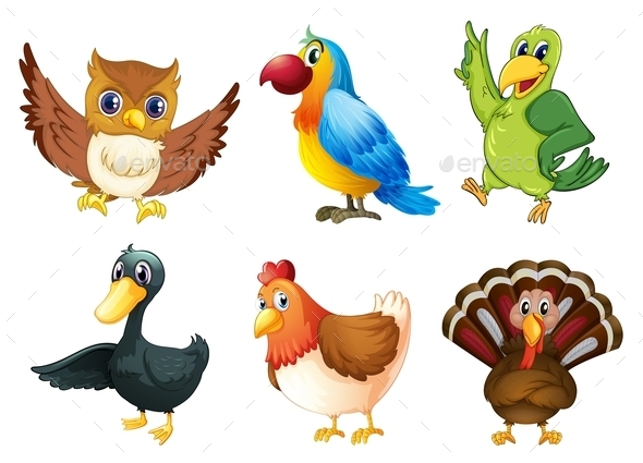 Six different species of birds - Animals Characters