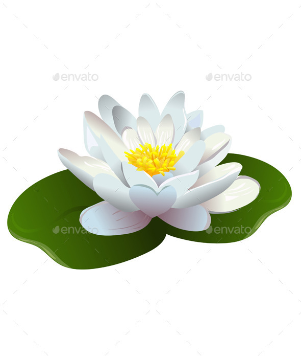 Lotus Flower - Flowers & Plants Nature