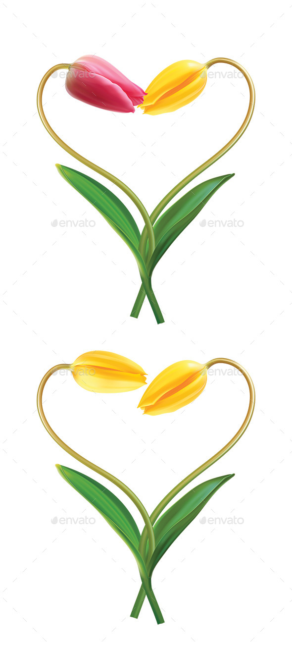 Heart From Two Tulips - Flowers & Plants Nature