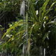 Raining in the Backyard 1 - VideoHive Item for Sale