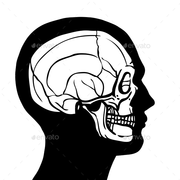 Human Head with Skull - People Characters