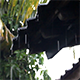 Rain Falling Down from the Roof 3 - VideoHive Item for Sale
