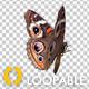 Flying Butterfly - American Buckeye - VideoHive Item for Sale