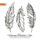 Feathers - GraphicRiver Item for Sale