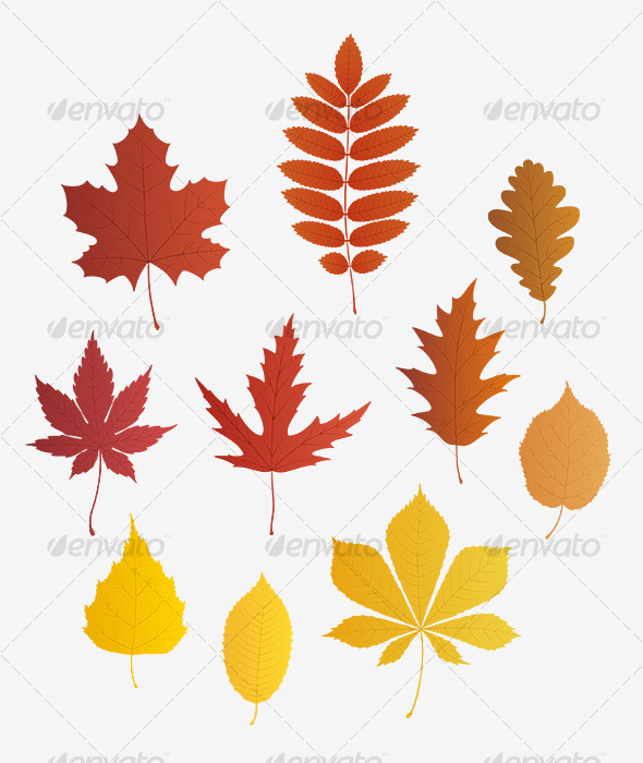 Autumn leaves - vector - Flowers & Plants Nature
