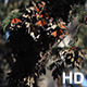 Monarch Butterfly Cluster in Pismo Beach - VideoHive Item for Sale