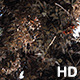 Large Cluster of Migrating Monarch Butterflies - VideoHive Item for Sale