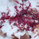 Blood Dripping on Snow - VideoHive Item for Sale