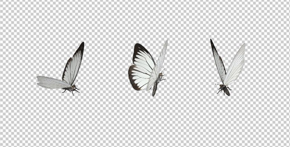 Flying Butterfly - White Cabbage by VideoMagus | VideoHive