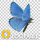 Flying Butterfly - Blue Adonis - VideoHive Item for Sale