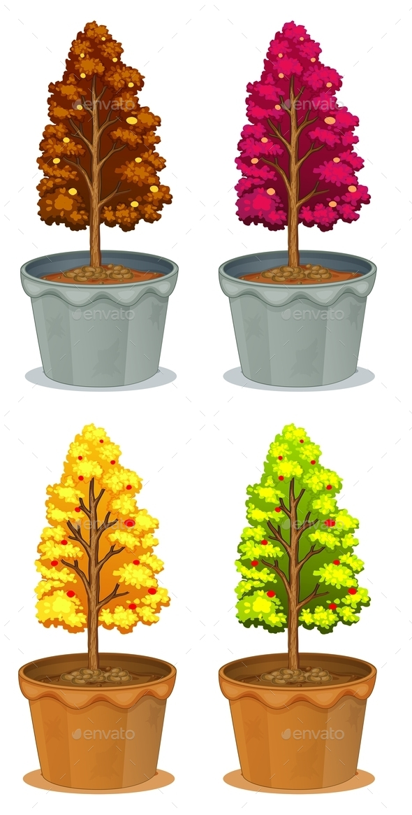 Four Pots of Plants - Flowers & Plants Nature
