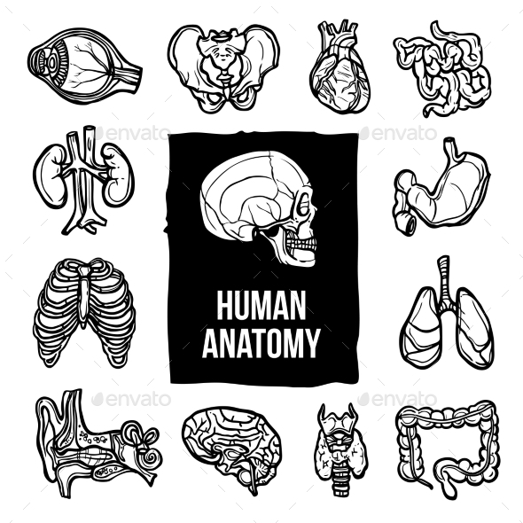 Anatomy Icons Set - Health/Medicine Conceptual