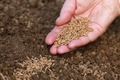 Sowing seeds in a garden - PhotoDune Item for Sale