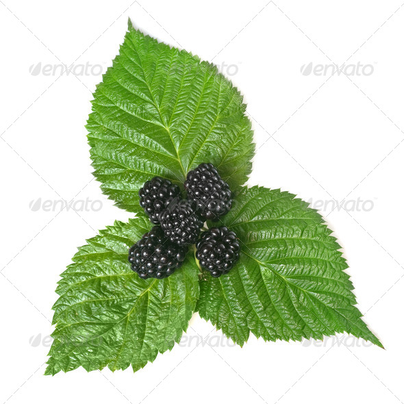 blackberry on green leaf isolated on white - Stock Photo - Images