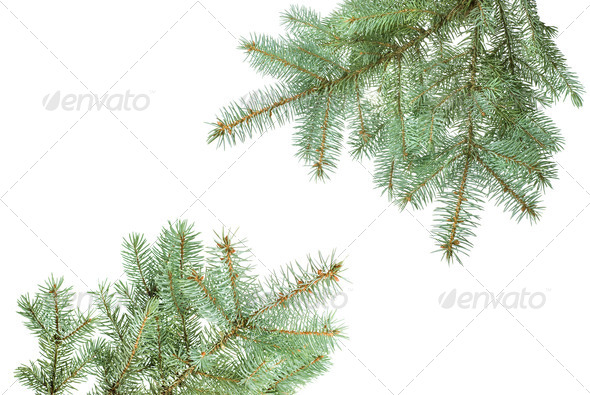Branch of christmas fir tree isolated on white - Stock Photo - Images