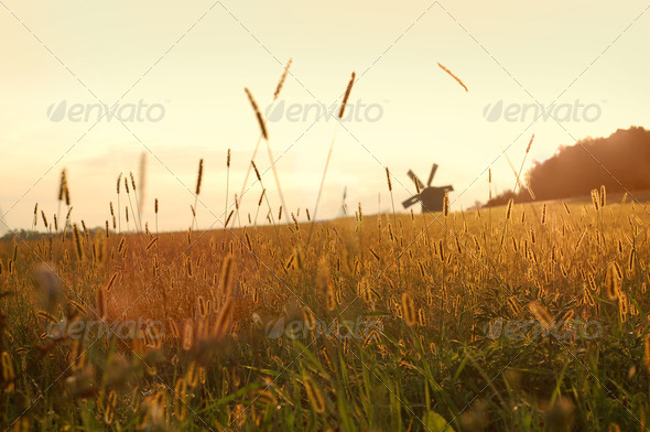 field on sunset - Stock Photo - Images