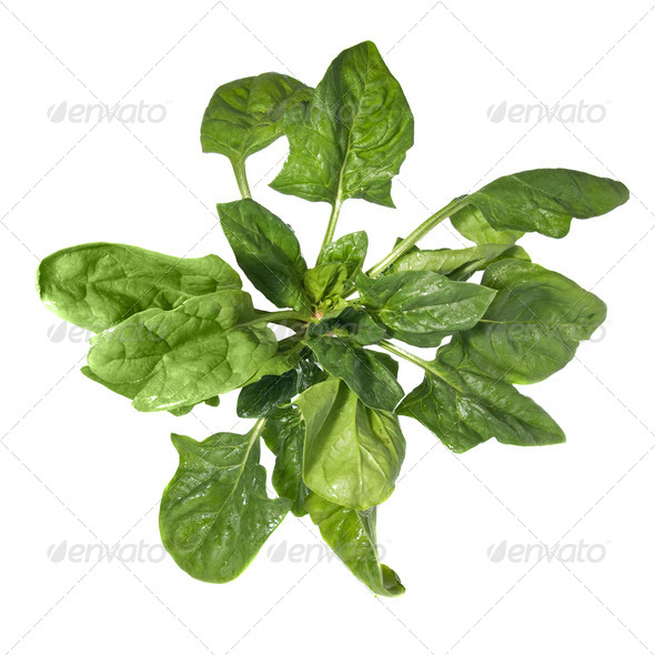 green spinach isolated on white - Stock Photo - Images