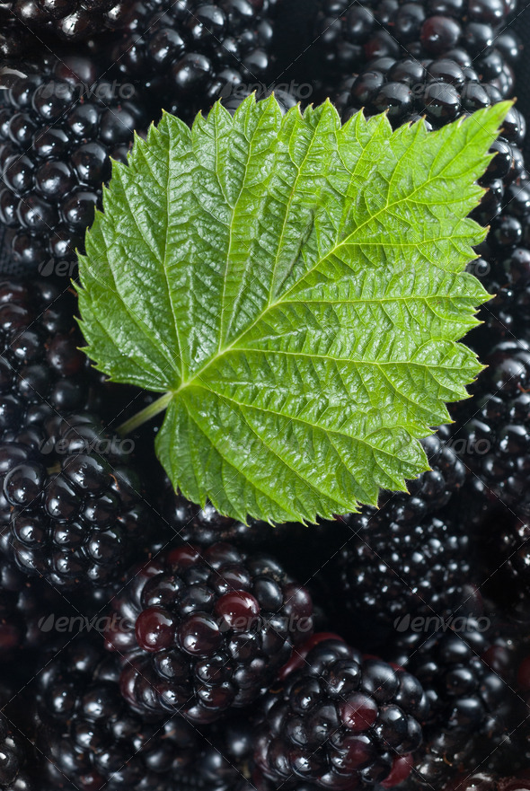 blackberry with green leaf - Stock Photo - Images