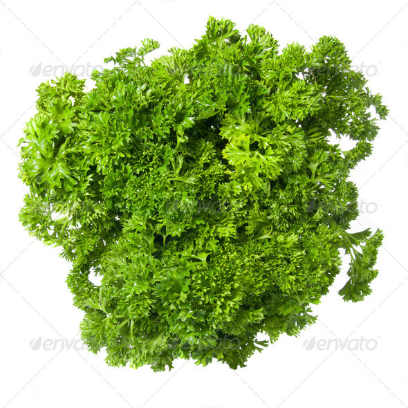 Bouquet of parsley isolated on white - Stock Photo - Images
