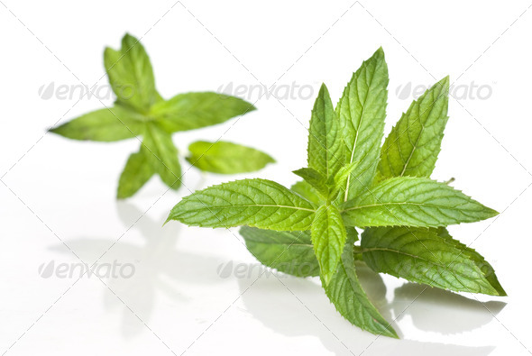green mint isolated on white - Stock Photo - Images