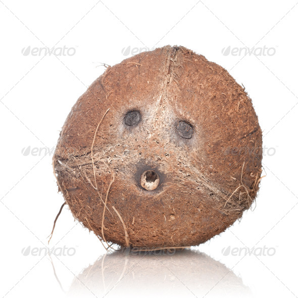 coconut isolated on white - Stock Photo - Images