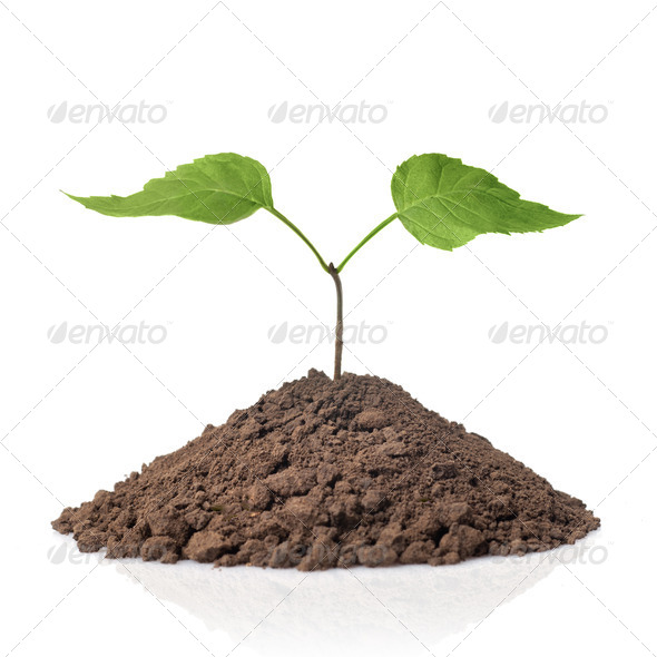 green plant with leaves in earth isolated on white - Stock Photo - Images