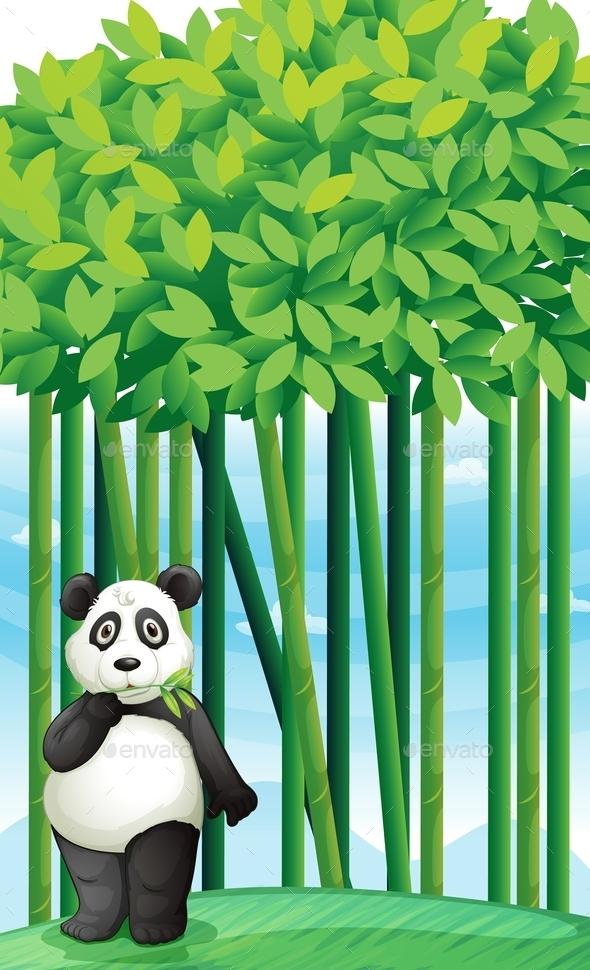 Panda - Animals Characters