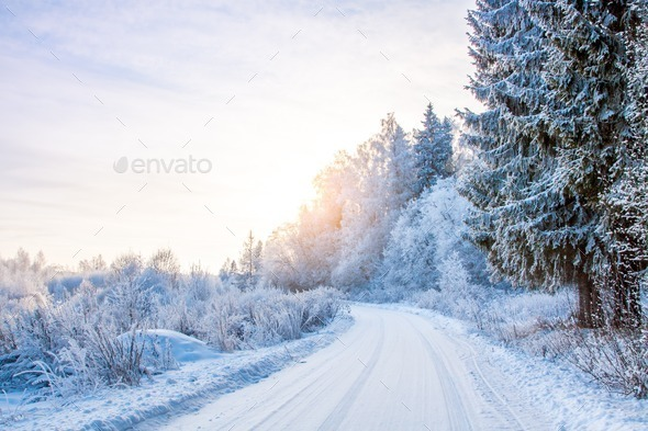 snowy road in the winter forest - Stock Photo - Images