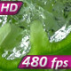 Chopped Green Pepper - VideoHive Item for Sale