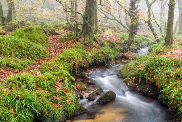 Woodland Stream - Stock Photo - Images