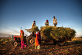 India Family Faeming Harvesting Crops - PhotoDune Item for Sale