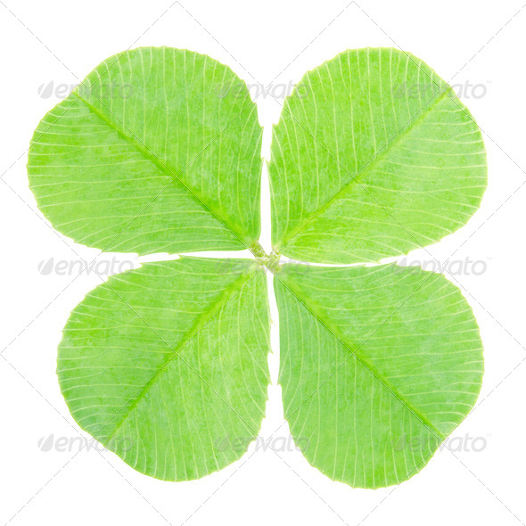 Green four leaf clover - Stock Photo - Images