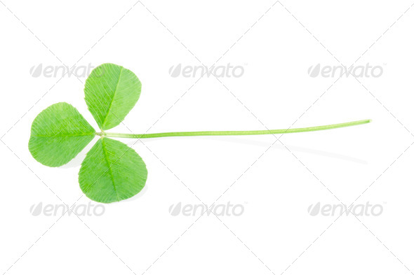 Green clover - Stock Photo - Images