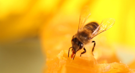 Honey and Beekeeping Products