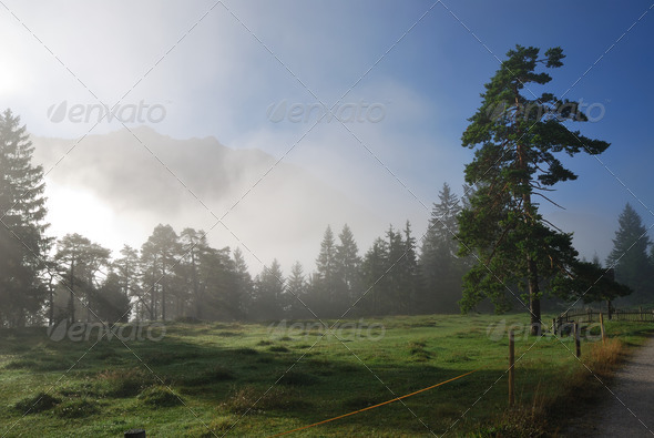 Foggy morning - Stock Photo - Images