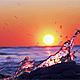 Winter Sunset on the Sea 2