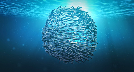 Fish Revealer