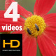 Exotic Flower Pack 01 - VideoHive Item for Sale