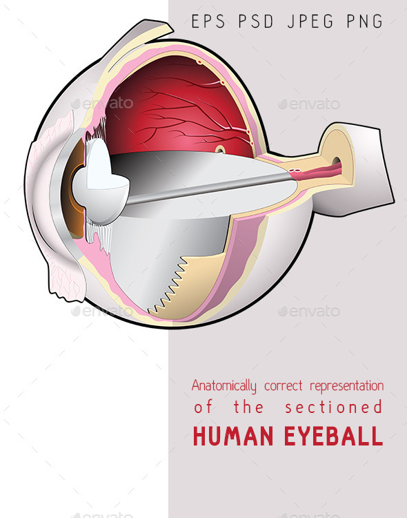The Human Eye - Section - Health/Medicine Conceptual